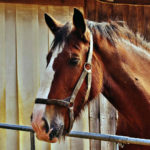 Lake Garda Horse Property. Owning a horse at Lake Garda
