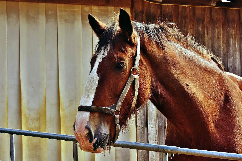 Lake Garda Horse Property. Owning a horse at Lake Garda